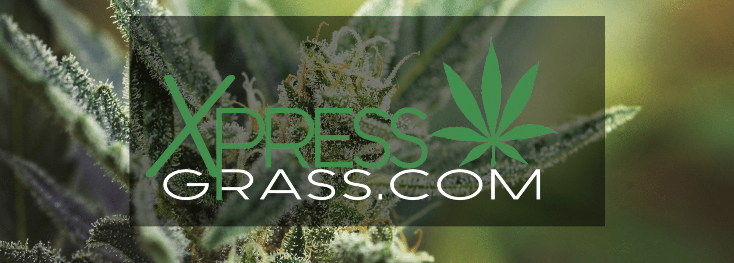 Xpress Grass Review